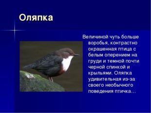 Оляпка Величиной чуть больше воробья, контрастно окрашенная птица с белым опе