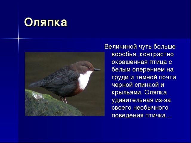 Оляпка Величиной чуть больше воробья, контрастно окрашенная птица с белым опе...