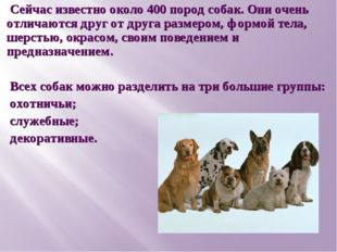 Сейчас известно около 400 пород собак. Они очень отличаются друг от друга раз