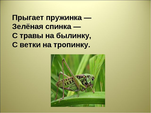 Прыгает пружинка — Зелёная спинка — С травы на былинку, С ветки на тропинку.