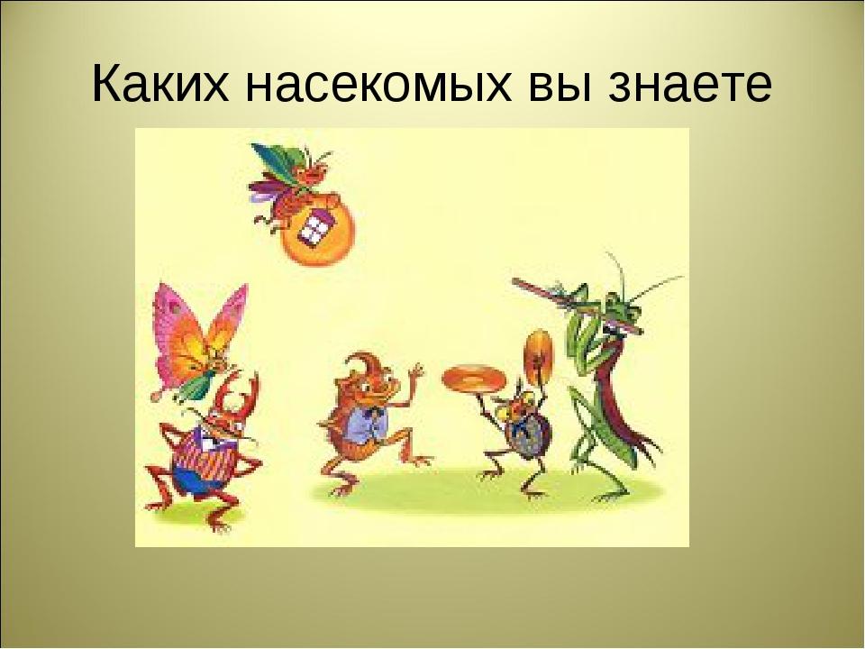 Каких насекомых вы знаете