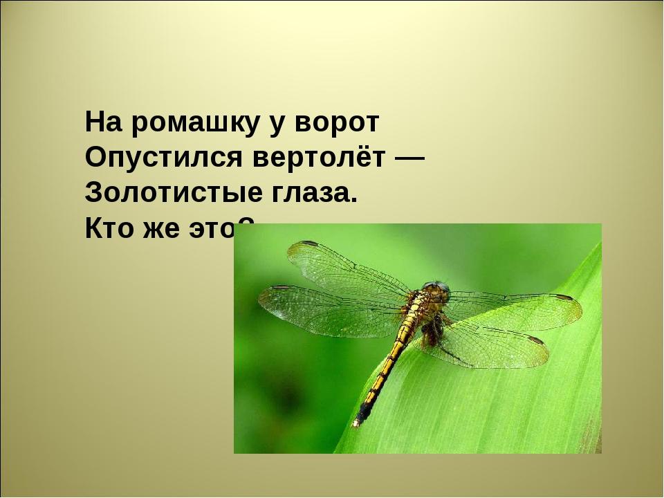 На ромашку у ворот Опустился вертолёт — Золотистые глаза. Кто же это?...