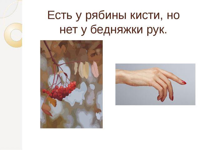Есть у рябины кисти, но нет у бедняжки рук.