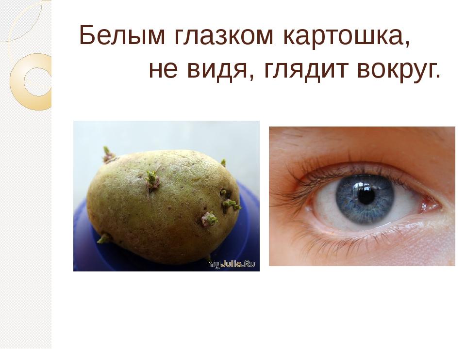 Белым глазком картошка, не видя, глядит вокруг.