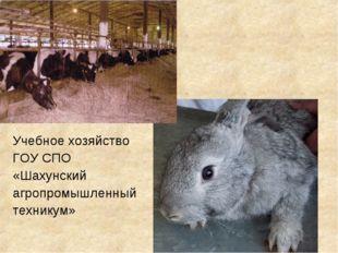 Учебное хозяйство ГОУ СПО «Шахунский агропромышленный техникум»
