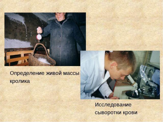 Определение живой массы кролика Исследование сыворотки крови
