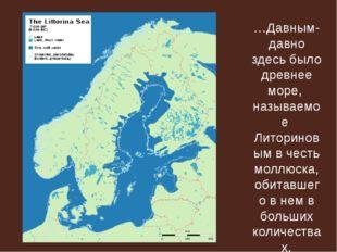 …Давным-давно здесь было древнее море, называемое Литориновым в честь моллюск