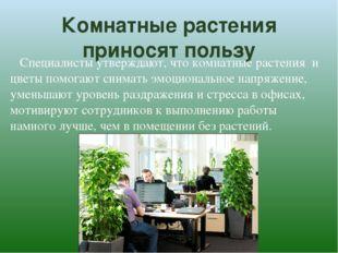 Комнатные растения приносят пользу Специалисты утверждают, что комнатные раст