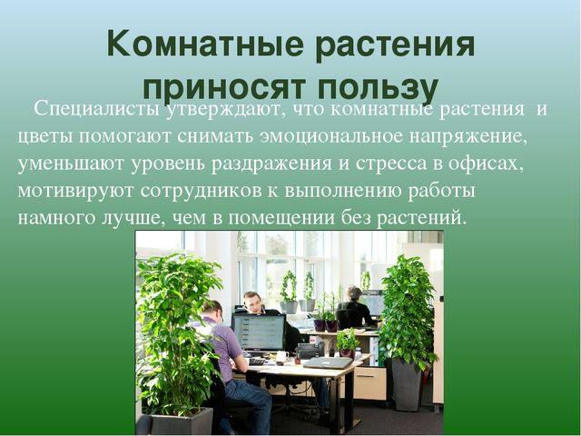 Комнатные растения приносят пользу Специалисты утверждают, что комнатные раст...