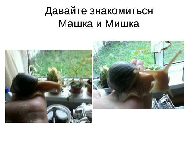 Давайте знакомиться Машка и Мишка