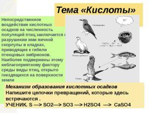 Непосредственное воздействие кислотных осадков на численность популяций птиц