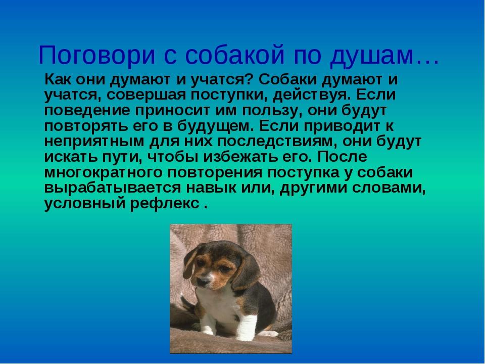 Поговори с собакой по душам… Как они думают и учатся? Собаки думают и учатся,...