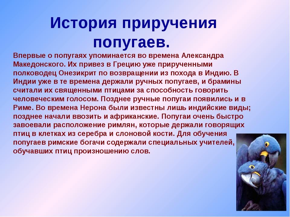 История приручения попугаев. Впервые о попугаях упоминается во времена Алекса...