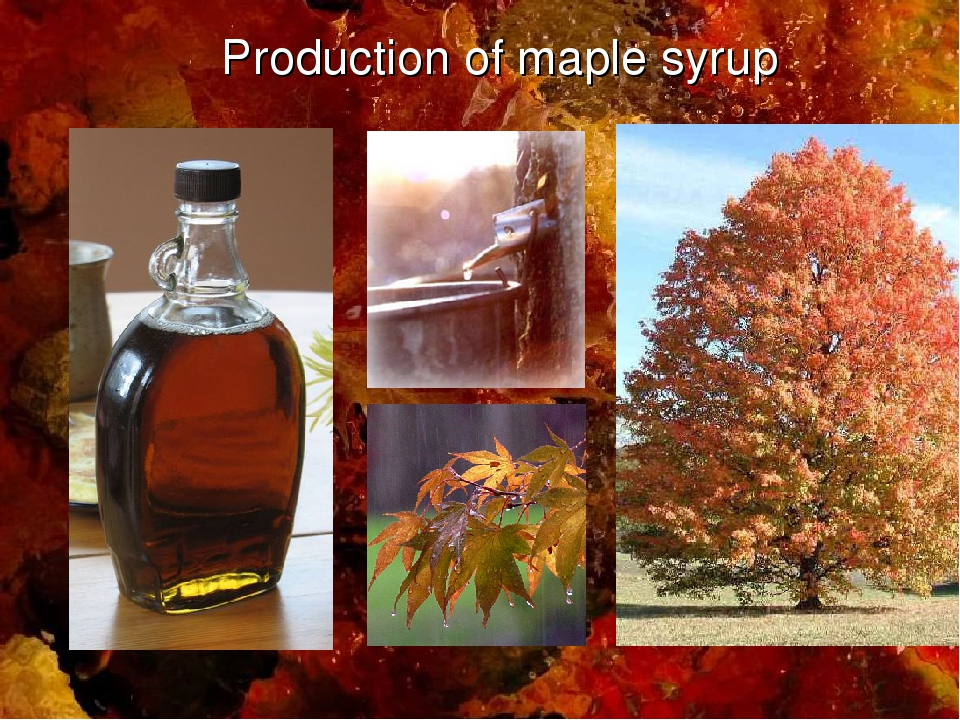 Production of maple syrup