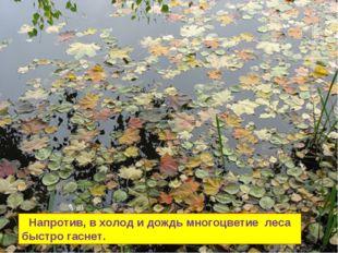 Напротив, в холод и дождь многоцветие леса быстро гаснет.