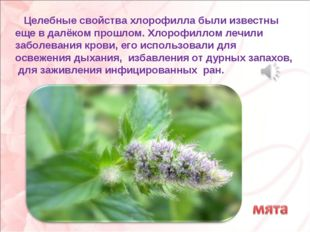 Целебные свойства хлорофилла были известны еще в далёком прошлом. Хлорофилло