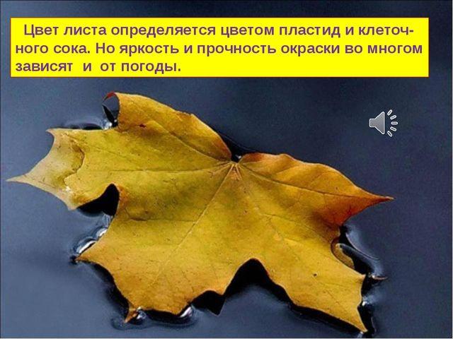 Цвет листа определяется цветом пластид и клеточ-ного сока. Но яркость и проч...