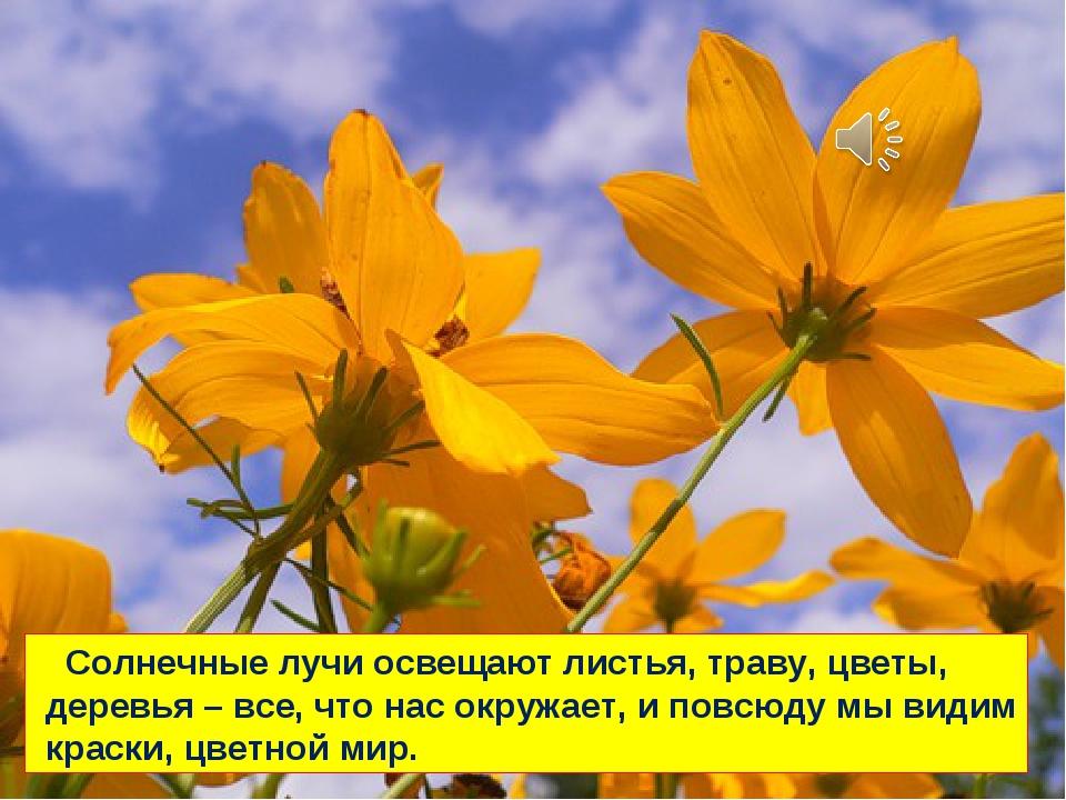 Солнечные лучи освещают листья, траву, цветы, деревья – все, что нас окружае...