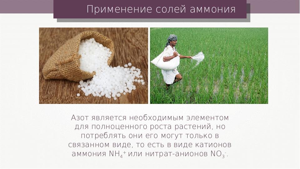 Применение солей аммония Азот является необходимым элементом для полноценного...