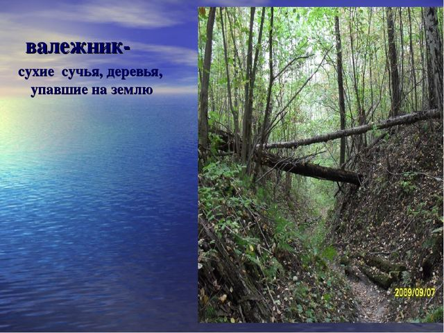 валежник- сухие сучья, деревья, упавшие на землю