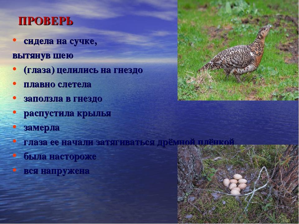 ПРОВЕРЬ  сидела на сучке, вытянув шею (глаза) целились на гнездо плавно слет...