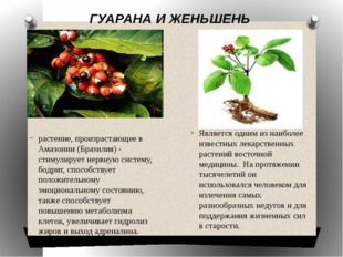 ГУАРАНА И ЖЕНЬШЕНЬ растение, произрастающее в Амазонии (Бразилия) - стимулир