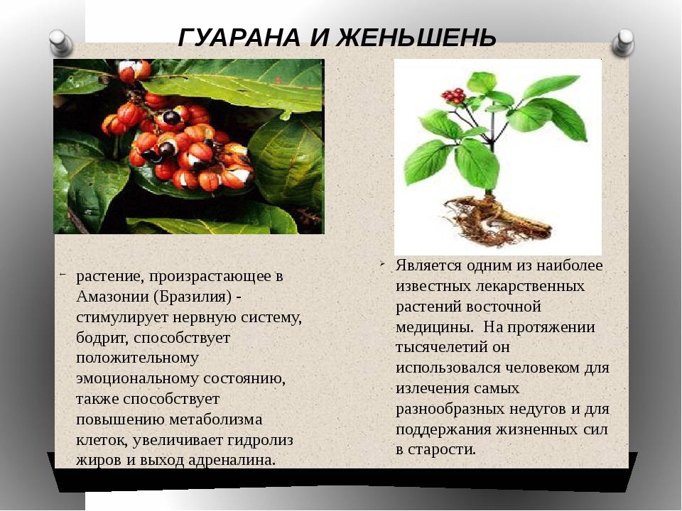 ГУАРАНА И ЖЕНЬШЕНЬ растение, произрастающее в Амазонии (Бразилия) - стимулир...