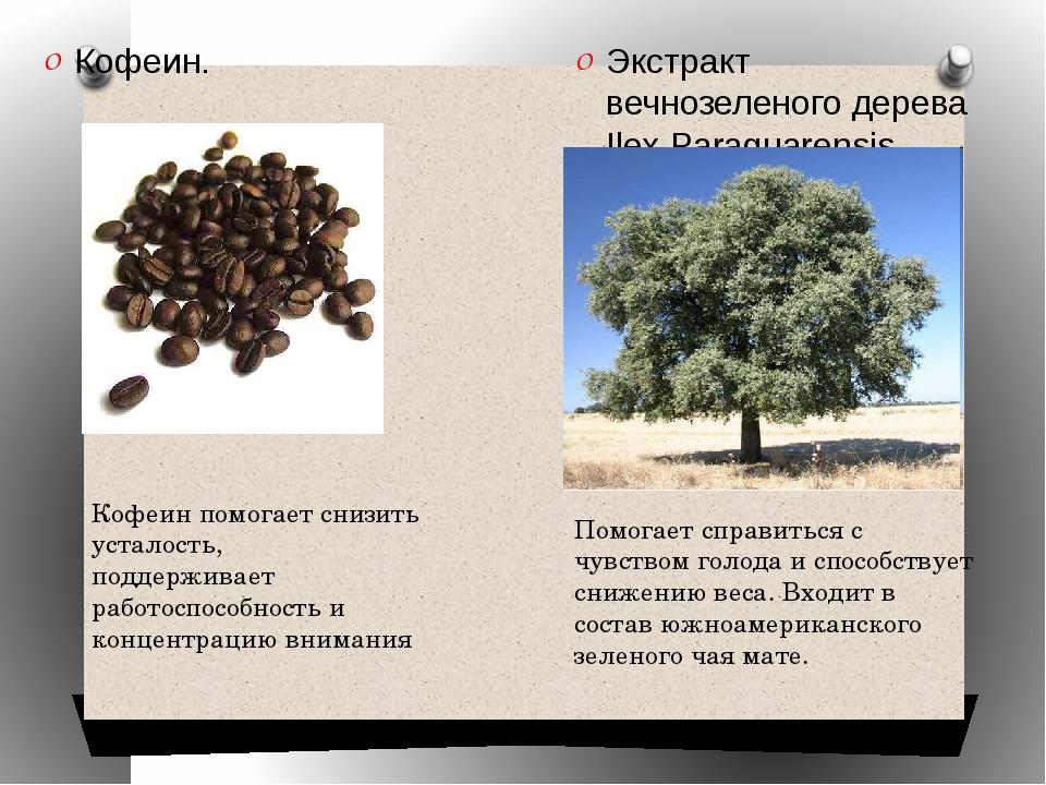 Кофеин. Экстракт вечнозеленого дерева Ilex Paraguarensis Кофеин помогает сниз...