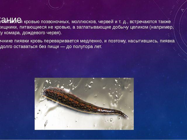 Питание Пиявки питаются кровью позвоночных, моллюсков, червей и т. д., встреч...