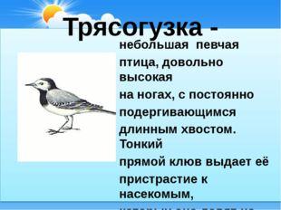 Трясогузка - небольшая певчая птица, довольно высокая на ногах, с постоянно п