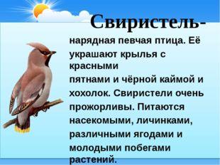 Свиристель- нарядная певчая птица. Её украшают крылья с красными пятнами и ч
