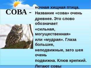 СОВА - ночная хищная птица. Название «сова» очень древнее. Это слово обознача