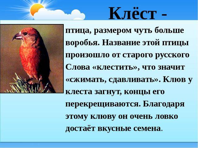 Клёст - птица, размером чуть больше воробья. Название этой птицы произошло о...