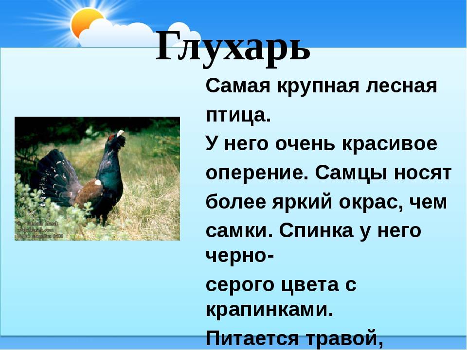 Глухарь Самая крупная лесная птица. У него очень красивое оперение. Самцы нос...