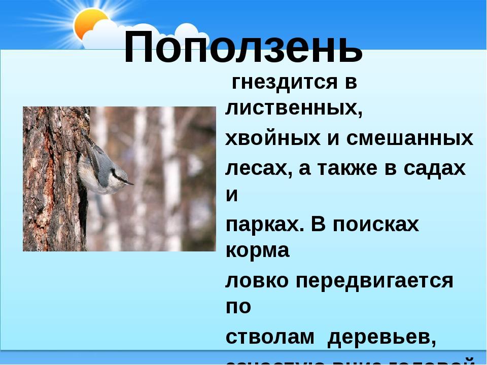 Поползень гнездится в лиственных, хвойных и смешанных лесах, а также в садах...