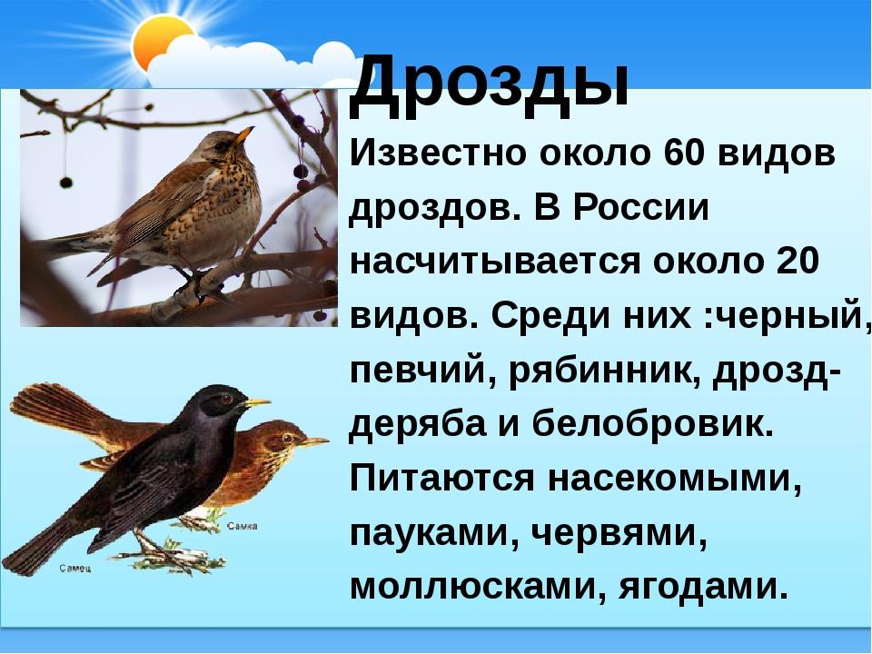 Дрозды Известно около 60 видов дроздов. В России насчитывается около 20 видо...