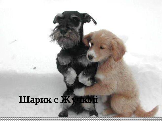 Шарик с Жучкой Иностранное происхождение имеют многие популярные у нас собач...