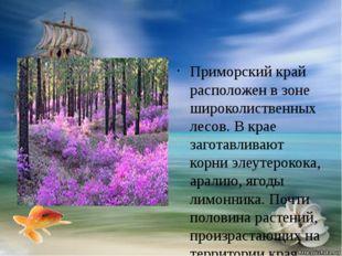 Приморский край расположен в зоне широколиственных лесов. В крае заготавлива