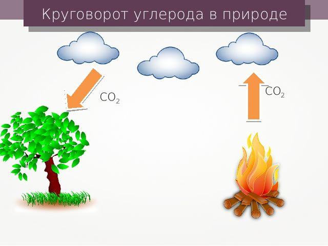 Круговорот углерода в природе CO2 CO2