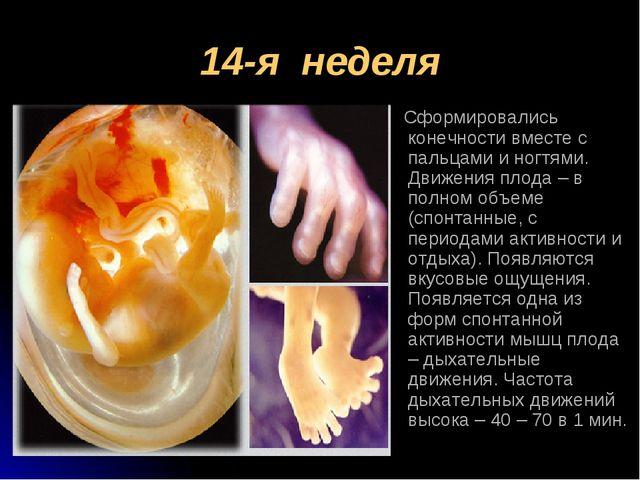 14-я неделя Сформировались конечности вместе с пальцами и ногтями. Движения п...