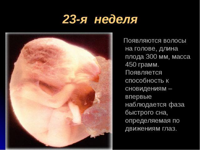 23-я неделя Появляются волосы на голове, длина плода 300 мм, масса 450 грамм....