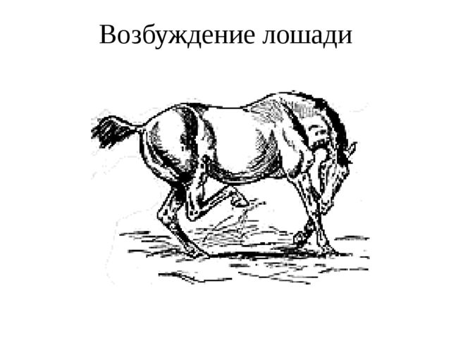 Возбуждение лошади