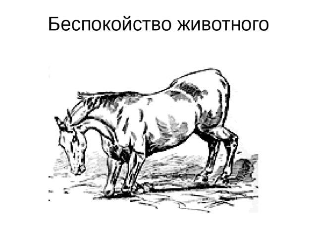 Беспокойство животного