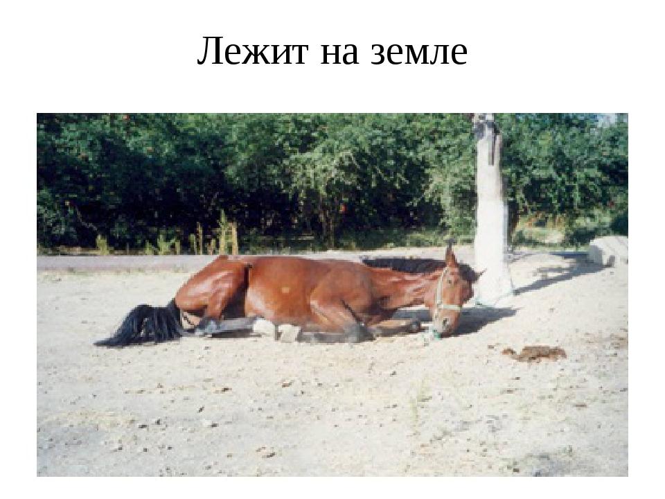 Лежит на земле