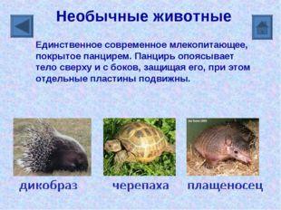 Необычные животные Единственное современное млекопитающее, покрытое панцирем.