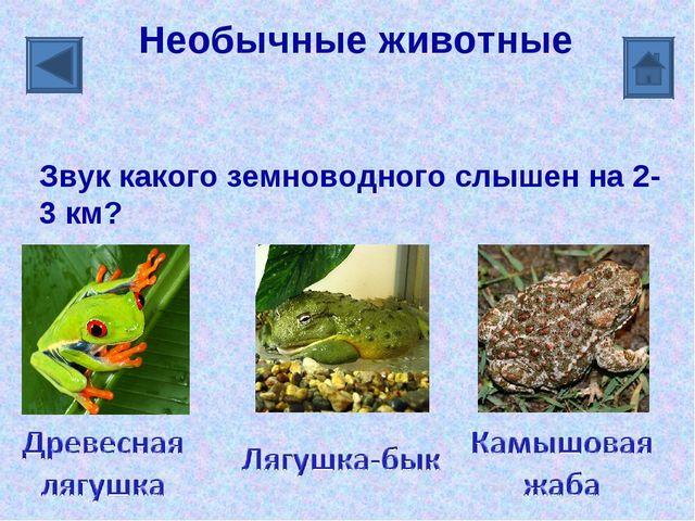 Необычные животные Звук какого земноводного слышен на 2-3 км?
