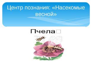 Центр познания: «Насекомые весной»