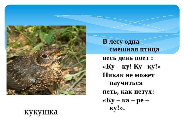 В лесу одна смешная птица весь день поет : «Ку – ку! Ку –ку!» Никак не может...