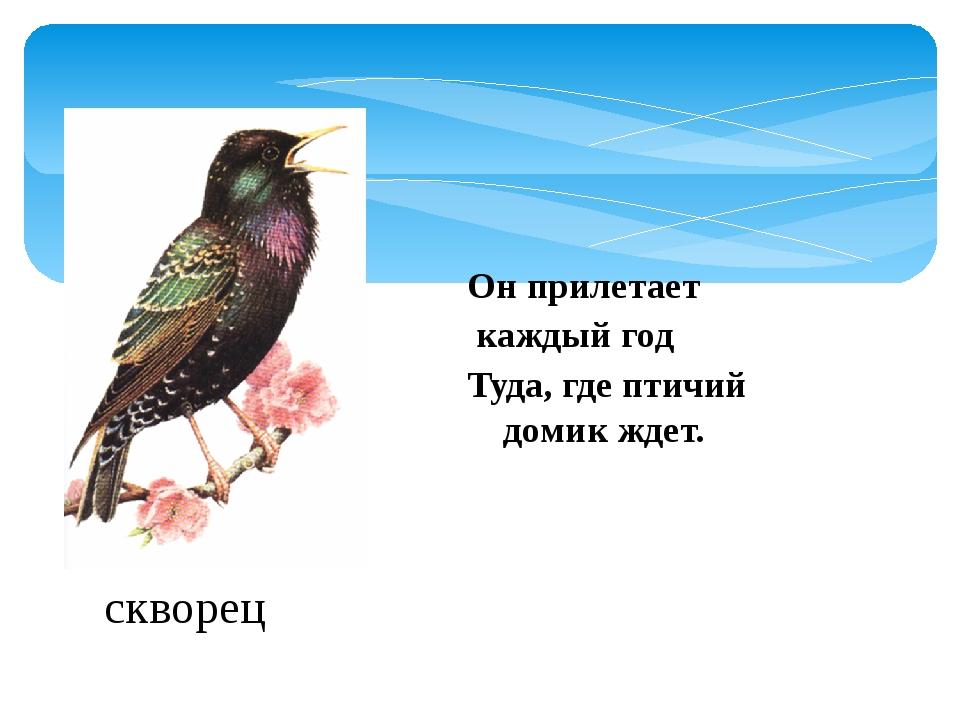 Он прилетает каждый год Туда, где птичий домик ждет. скворец