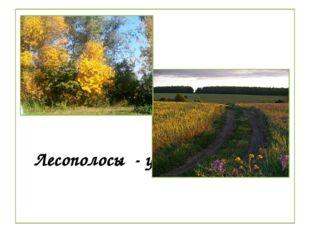 Лесополосы - украшение села.